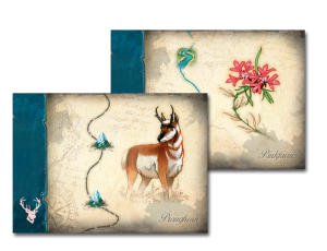 discoveries_cartes