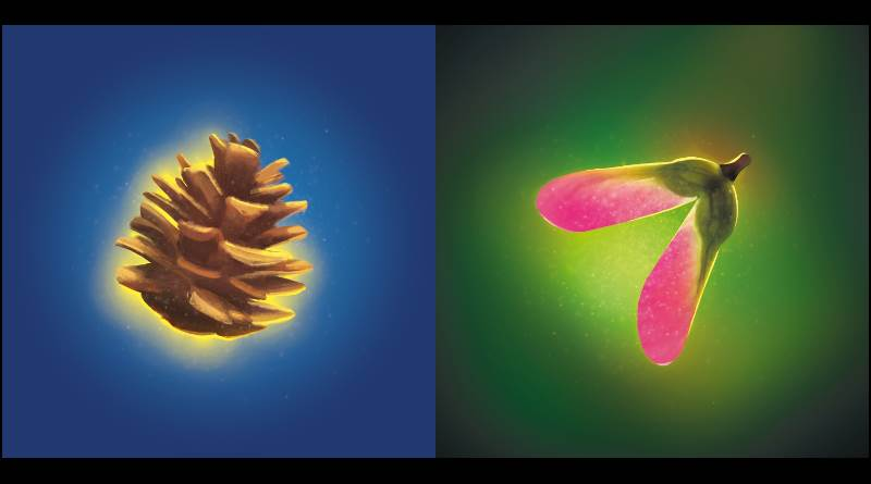 Photosynthesis, de l'art de se faire une place au soleil
